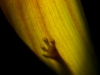 bambousek_03