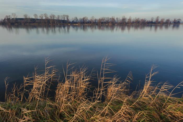 Wisla w okolicach Krasek (gm Maciejowice, powiat garwolinski) - jesienny swit
