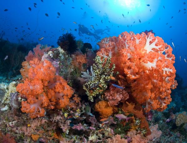 Nurek i rafa koralowa