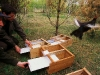 Reintroduction of Black grouse in Podlasie national Park, Poland