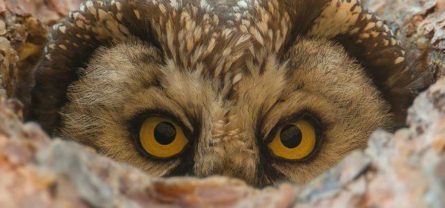 Cezary Korkosz (1968), fotograf dzikiej przyrody, podróżnik ipejzażysta, wypracował niepowtarzalny […]
