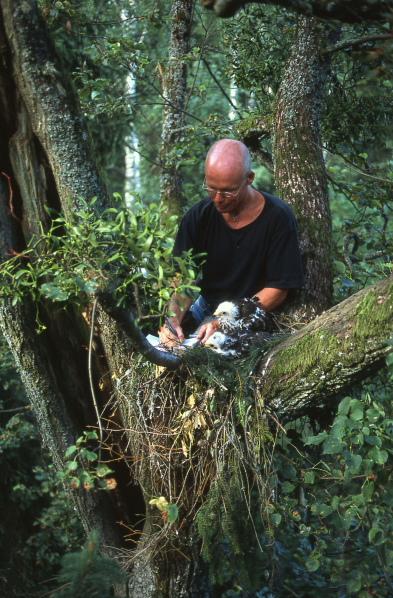 Ornithologist in Bialowieza forest (Poland)