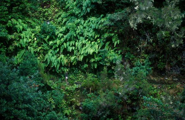 Laurisilva forest, Madeira Natural Park, Madeira