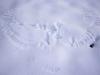 White-tailed se eagle (Haliaaetus albicilla) wings prints on the